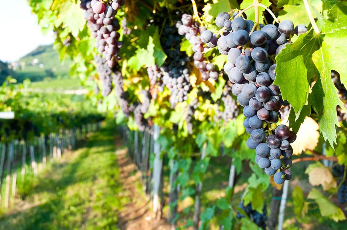 Valpolicella Wine Tour - Wine Estate