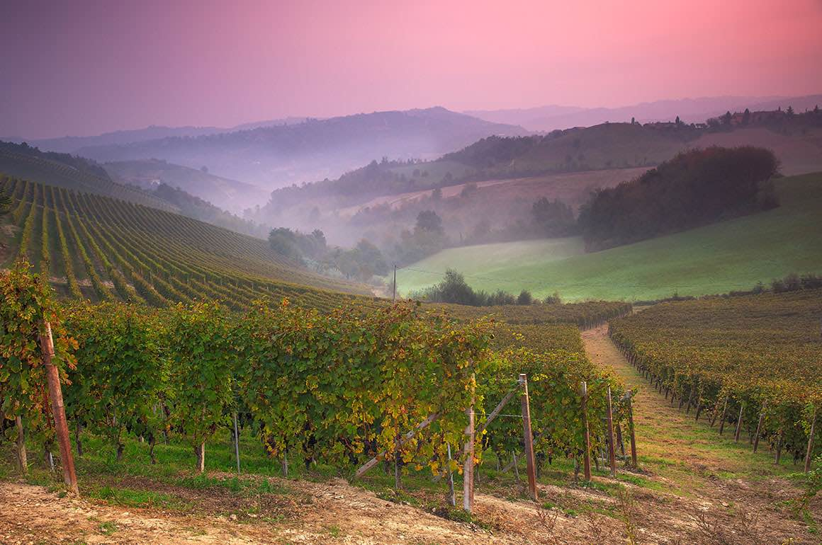 Day Trip to Langhe - Winery